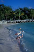 Sonesta Island,  Aruba, Caribbean by Robin Hill - various sizes