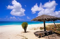Coco Point Beach, Barbuda, Antigua Fine Art Print