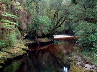 Oparara River, Oparara Basin, New Zealand by William Sutton - various sizes