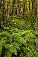 Ferns and native bush near Matai Falls, Catlins, South Otago, South Island, New Zealand by David Wall - various sizes - $37.49