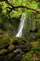 Matai Falls, Catlins, South Otago, South Island, New Zealand by David Wall - various sizes