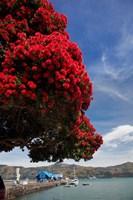Pohutukawa tree and Akaroa Harbour, Akaroa, Banks Peninsula, Canterbury, South Island, New Zealand Fine Art Print