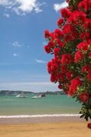 Pohutukawa tree, beach, Paihia, North Island, New Zealand by David Wall - various sizes - $37.49