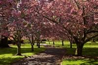 Spring, Ashburton Domain, Mid-Canterbury, New Zealand by David Wall - various sizes