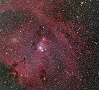 Cone and Christmas Tree Nebula by Phillip Jones - various sizes