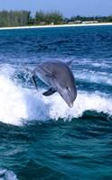 Dolphin Jumping, Grand Bahama, Bahamas by Michael DeFreitas - various sizes