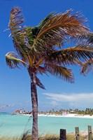 Palm Tree of Castaway Cay, Bahamas, Caribbean by Kymri Wilt - various sizes