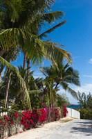 Bahamas, Eleuthera, Harbor Island, Dunmore, Flora by Walter Bibikow - various sizes, FulcrumGallery.com brand