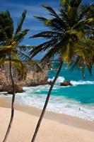 Palm trees, Bottom Bay, Barbados, West Indies Framed Print