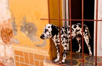 Spotted dog and colorful wall in Trinidad Cuba by Bill Bachmann - various sizes