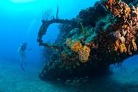 Scuba diver, RMS Rhone wreck, British Virgin Isl Fine Art Print