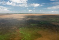 Brazil, Amazon River, Algae bloom Fine Art Print