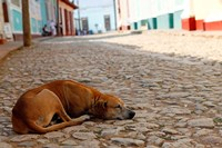 Cuba, Trinidad Dog sleeping in the street by Kymri Wilt - various sizes