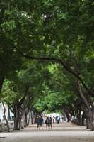 Cuba, Havana, Havana Vieja, Paseo de Marti walkway by Walter Bibikow - various sizes - $36.49