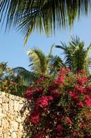 Viva Wyndham Dominicus Beach, Bayahibe, Dominican Republic Fine Art Print