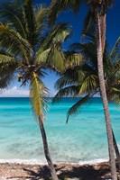 Cuba, Matanzas Province, Varadero, Varadero Beach palms Fine Art Print