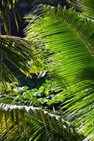 Dominica, Roseau, Vegetation, rainforest by Walter Bibikow - various sizes
