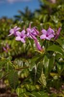 Tropical purple flowers, Bavaro, Higuey, Punta Cana, Dominican Republic by Lisa S. Engelbrecht - various sizes
