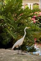 White Egret tropical bird, Bavaro, Higuey, Punta Cana, Dominican Republic Fine Art Print