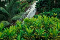 Shaw Park Gardens, Jamaica, Caribbean by Robin Hill - various sizes