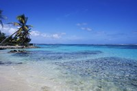Beach and Palms in Sainte Anne, Guadeloupe by Bill Bachmann - various sizes, FulcrumGallery.com brand