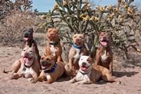 American Pitt Bull Terrier dogs, cactus Fine Art Print