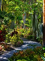 Nature Trail in Charlestown on Nevis, West Indies by Joe Restuccia III - various sizes