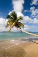 Coconut Grove Beach, Cades Bay, St Kitts, Caribbean Fine Art Print