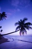 Palm tree, Coconut Grove beach, Cade's Bay, Caribbean by Greg Johnston - various sizes