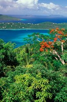 Magens Bay, St Thomas, Caribbean by Robin Hill - various sizes