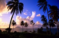 Coastline, St Kitts Fine Art Print