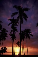Palm Trees at Sunset, Puerto Rico by Greg Johnston - various sizes