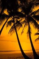 Sunset and Palms, San Juan, Puerto Rico Fine Art Print
