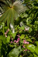 Tropical flowers and palm tree, Grand Cayman, Cayman Islands, British West Indies by Lisa S. Engelbrecht - various sizes