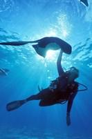 Snorkeling, Stingray City, Grand Cayman, Caribbean by Greg Johnston - various sizes