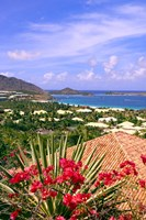 Orient Bay and pink flowers, St Martin, Caribbean by Michael DeFreitas - various sizes