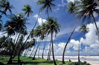 View of Manzanilla Bay, Port of Spain, Trinidad, Caribbean Fine Art Print