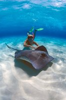 Stingray City, Grand Cayman, Cayman Islands, Caribbean by Greg Johnston - various sizes, FulcrumGallery.com brand