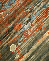 Lichens on stone, Banff NP, Alberta, Canada Fine Art Print