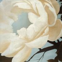 "Flora Study by KC Haxton - 30"" x 30"""