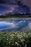 Alberta, Banff National Park Lake Maligne wildflowers by Gavriel Jecan - various sizes