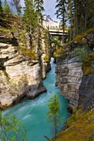 Athabasca Falls, Jasper National Park, Alberta, Canada Fine Art Print