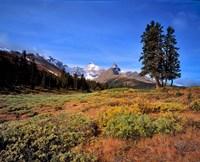 Landscape with Mt Saskatchewan, Banff NP, Alberta Fine Art Print