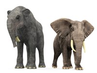An adult Deinotherium compared to a modern adult African Elephant by Walter Myers - various sizes