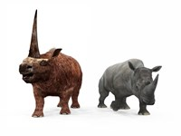 An adult Elasmotherium compared to a modern adult White Rhinoceros by Walter Myers - various sizes