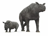 An adult Paraceratherium compared to a modern adult White Rhinoceros by Walter Myers - various sizes
