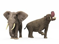 An adult Platybelodon compared to a modern adult African Elephant by Walter Myers - various sizes