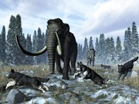 A pack of dire wolves crosses paths with two mammoths during the Upper Pleistocene Epoch Fine Art Print