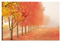 Fall Trees in the Mist Fine Art Print