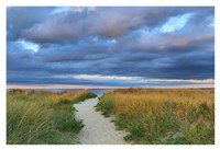 Jetties Beach Path Fine Art Print